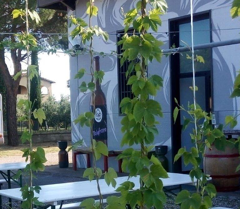 Cena nel Giardino della Birra BVS